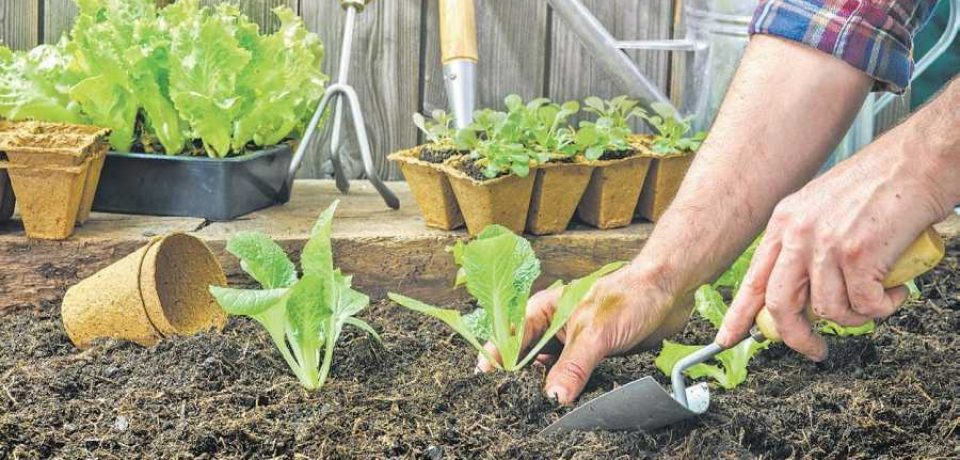 CHOOSE A MENTOR FOR YOUR GARDENING ENDEANOURS